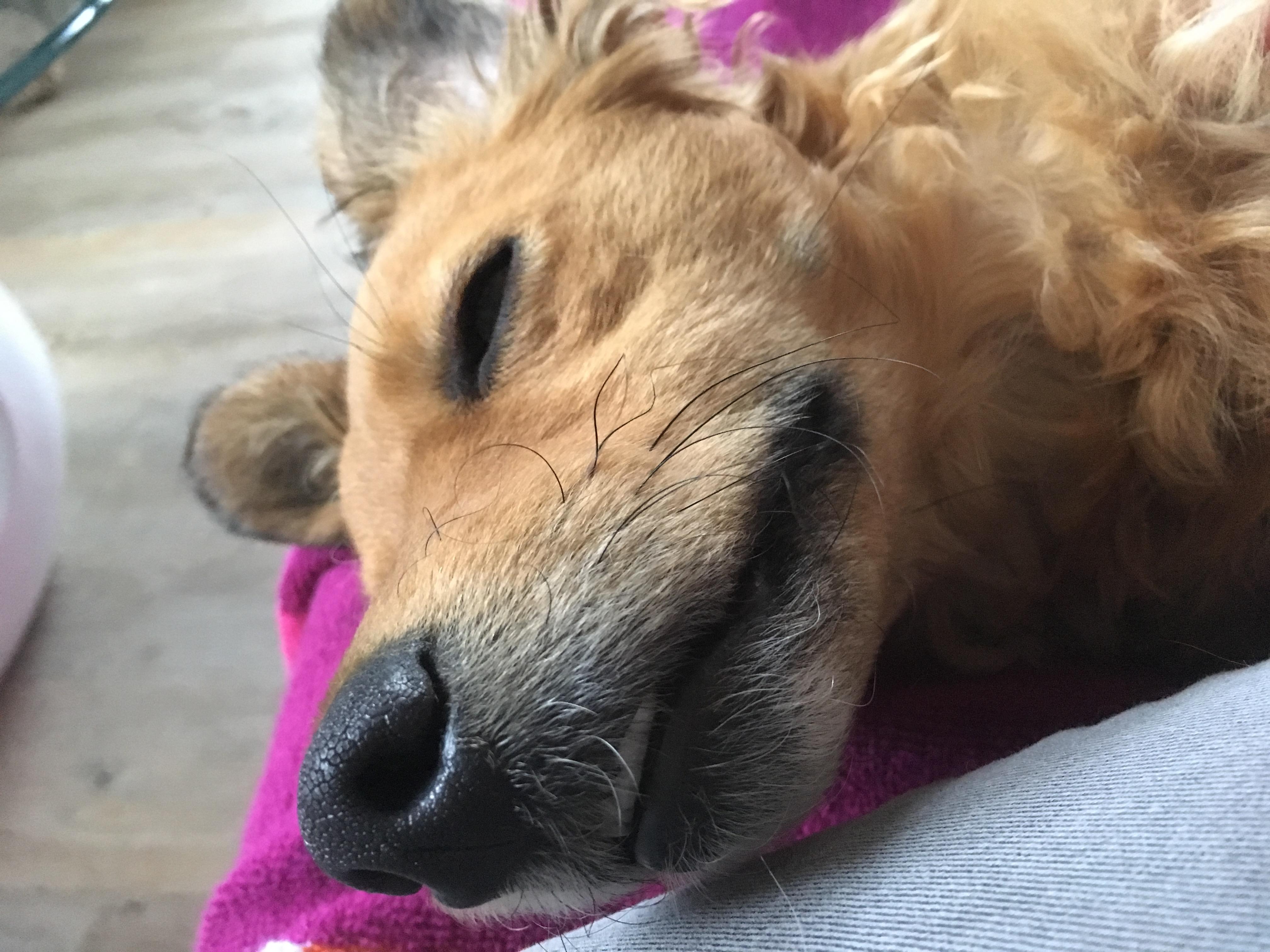 Elektrotherapie bei Hunden und Katzen